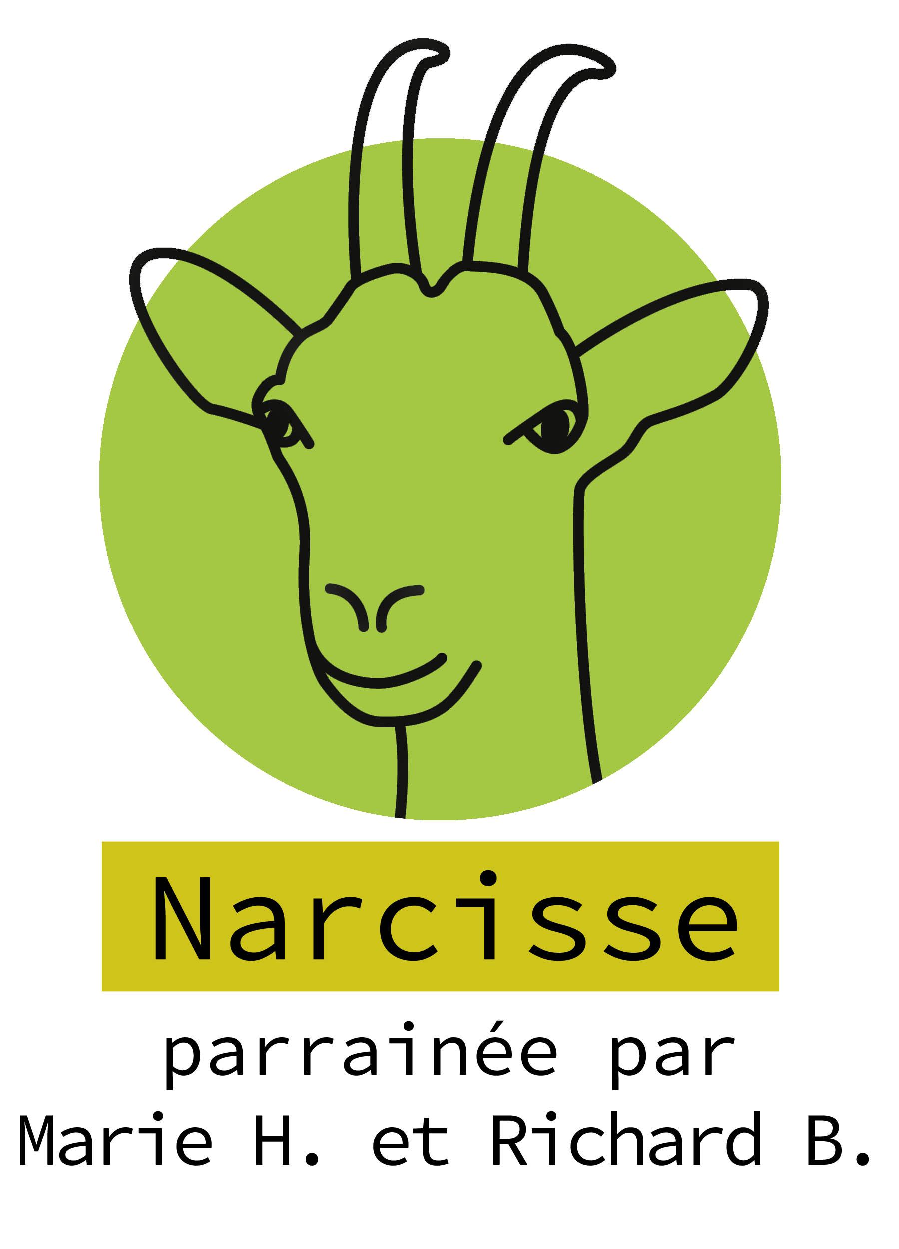 36-Narcisse.jpg